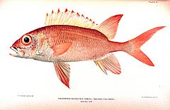 Fish of the week squirrelfish aquatic veterinary services for Big eye squirrel fish