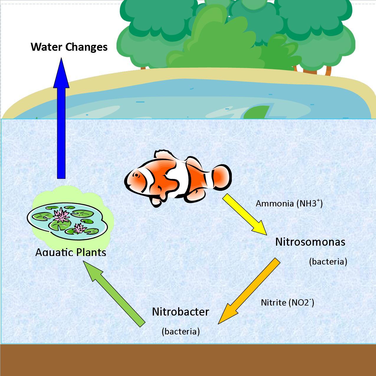 worksheet Phosphorus Cycle Worksheet Fiercebad Worksheet And – Phosphorus Cycle Worksheet