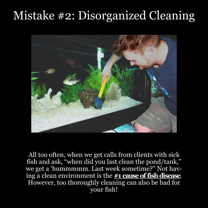 Top 5 Fish Mistakes – #2: Disorganized Cleaning