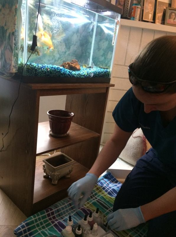 Checking goldfish water quality