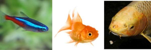 fish comparison