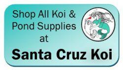 Shop Santa Cruz Koi