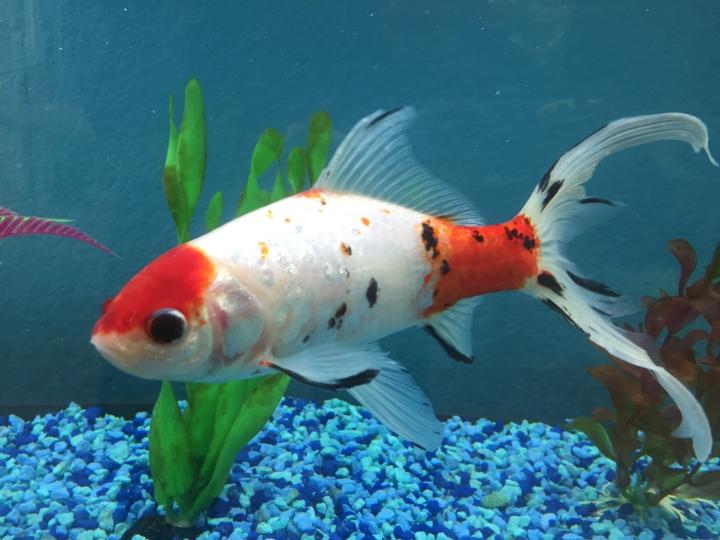 Best Fish forBeginners