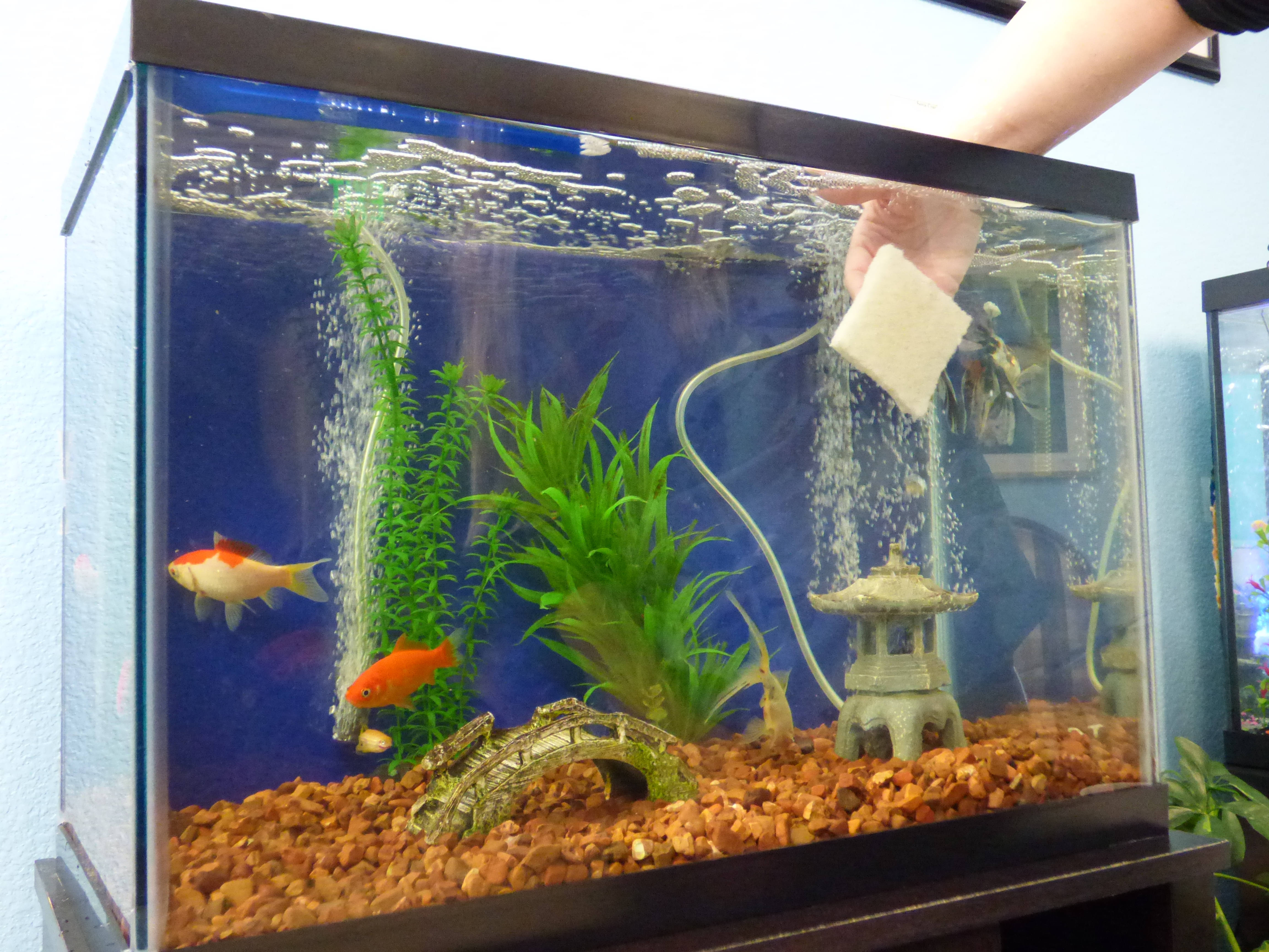 march 2018 aquatic veterinary services