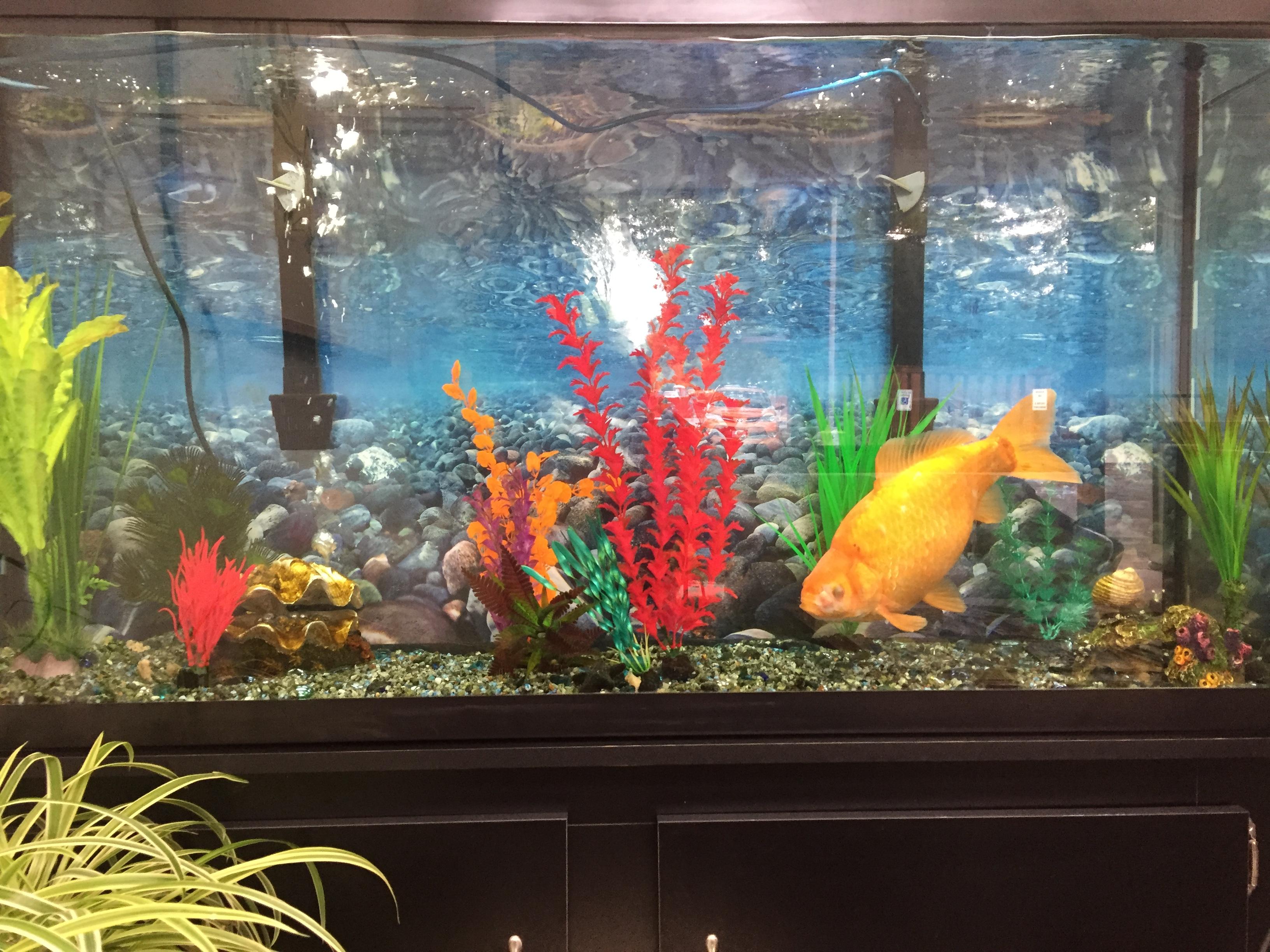 goldfish aquatic veterinary services