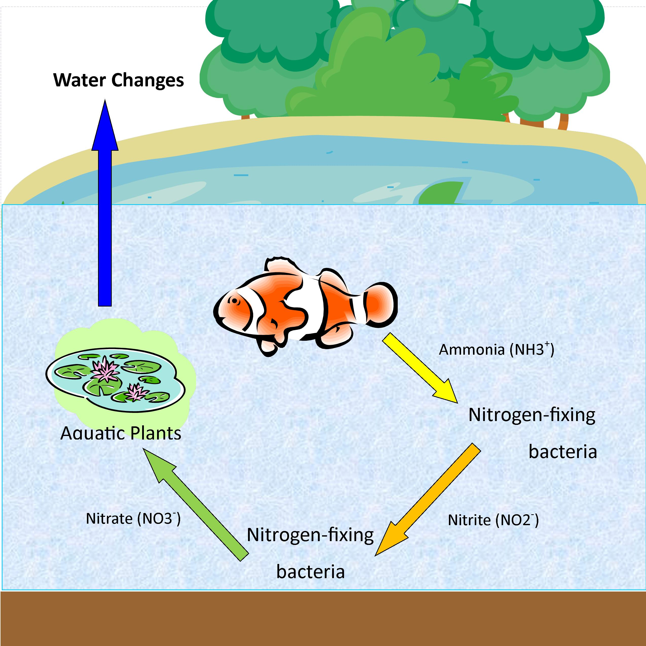 Aquatic nitrogen cycle diagram diy enthusiasts wiring diagrams aquatic nitrogen cycle diagram images gallery ccuart