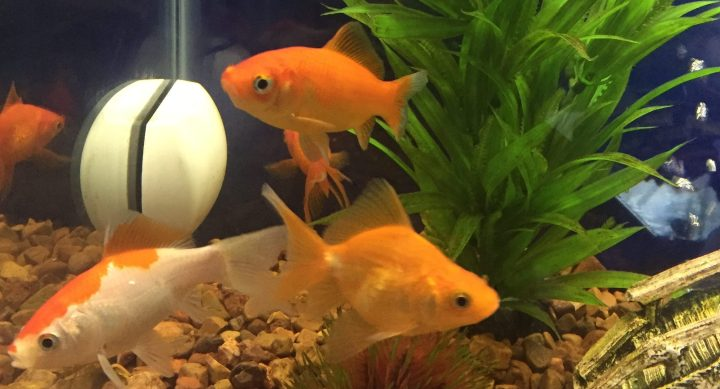 Don't Flush ThatFish!